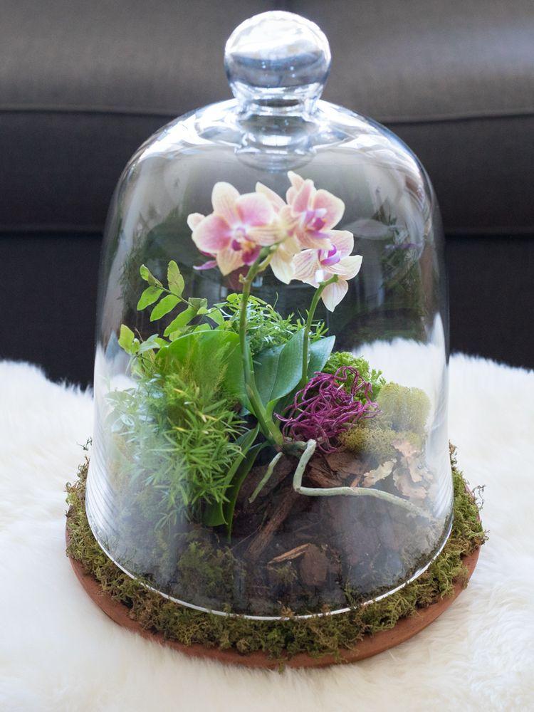 Diy Orchids Terrarium Moss Terrarium Diy