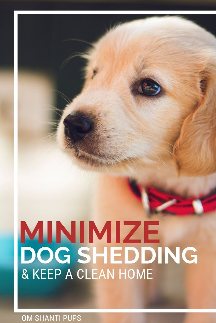 How To Minimize Dog Shedding And Keep A Home Clean Dog Shedding