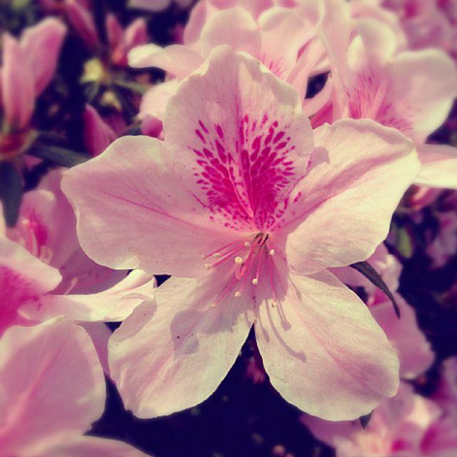 Simple Flower So Pretty Flowers Simple Flowers Pretty