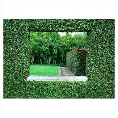 window hedge