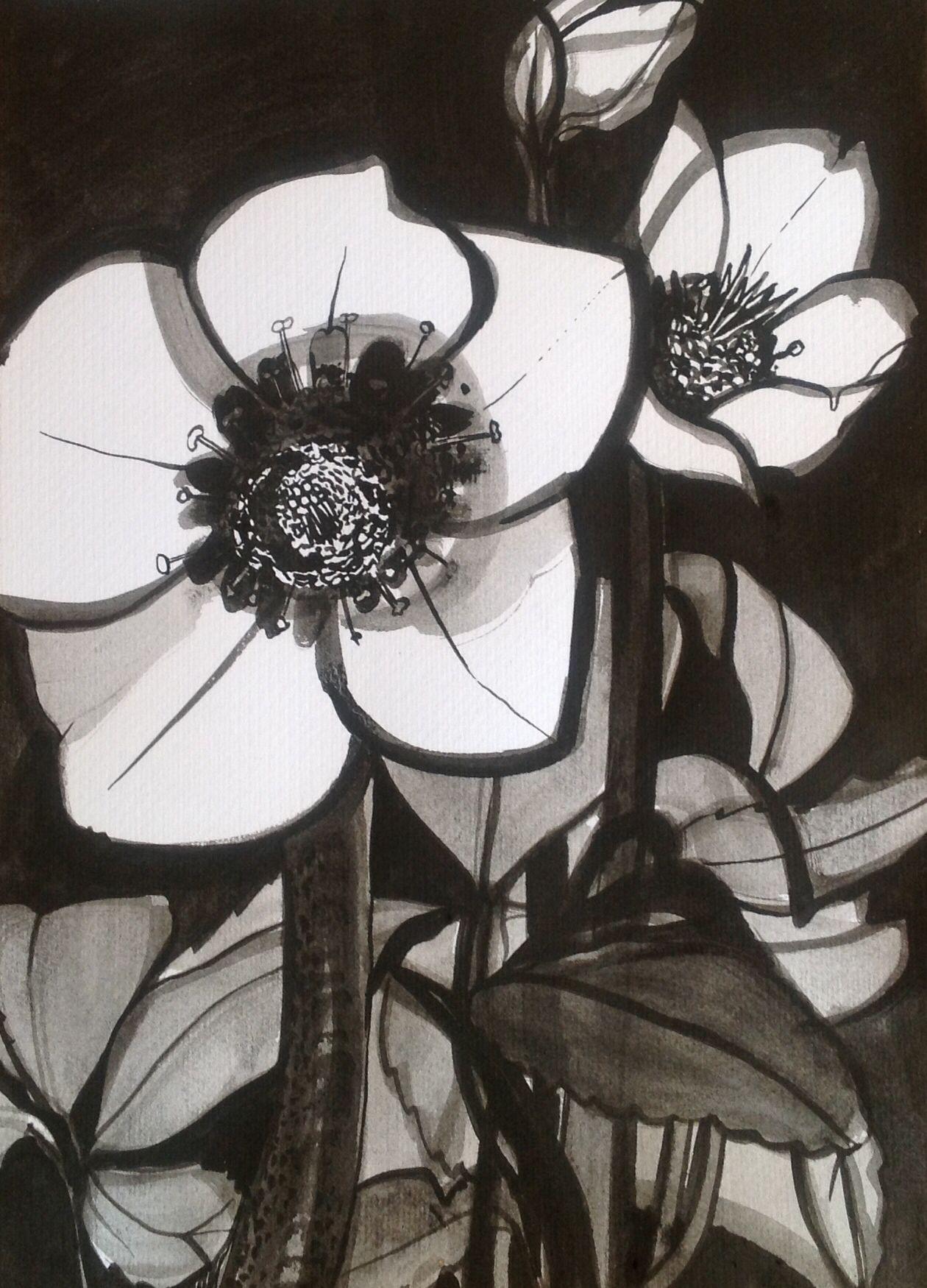 Lenten Rose by Emily Gillmor | Lenten rose, Drawings, Fair grounds
