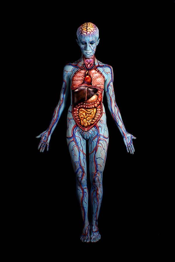 Photo of Human anatomy painted on real bodies. Johannes Stötter, artist …