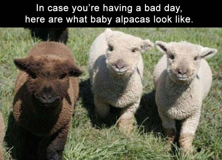 Funny Memes For A Bad Day : Afternoon funny picture dump pics funny animals