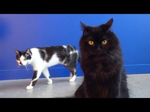 8 Signs Your Cat is Trying to Kill You!   #video #animals #cats