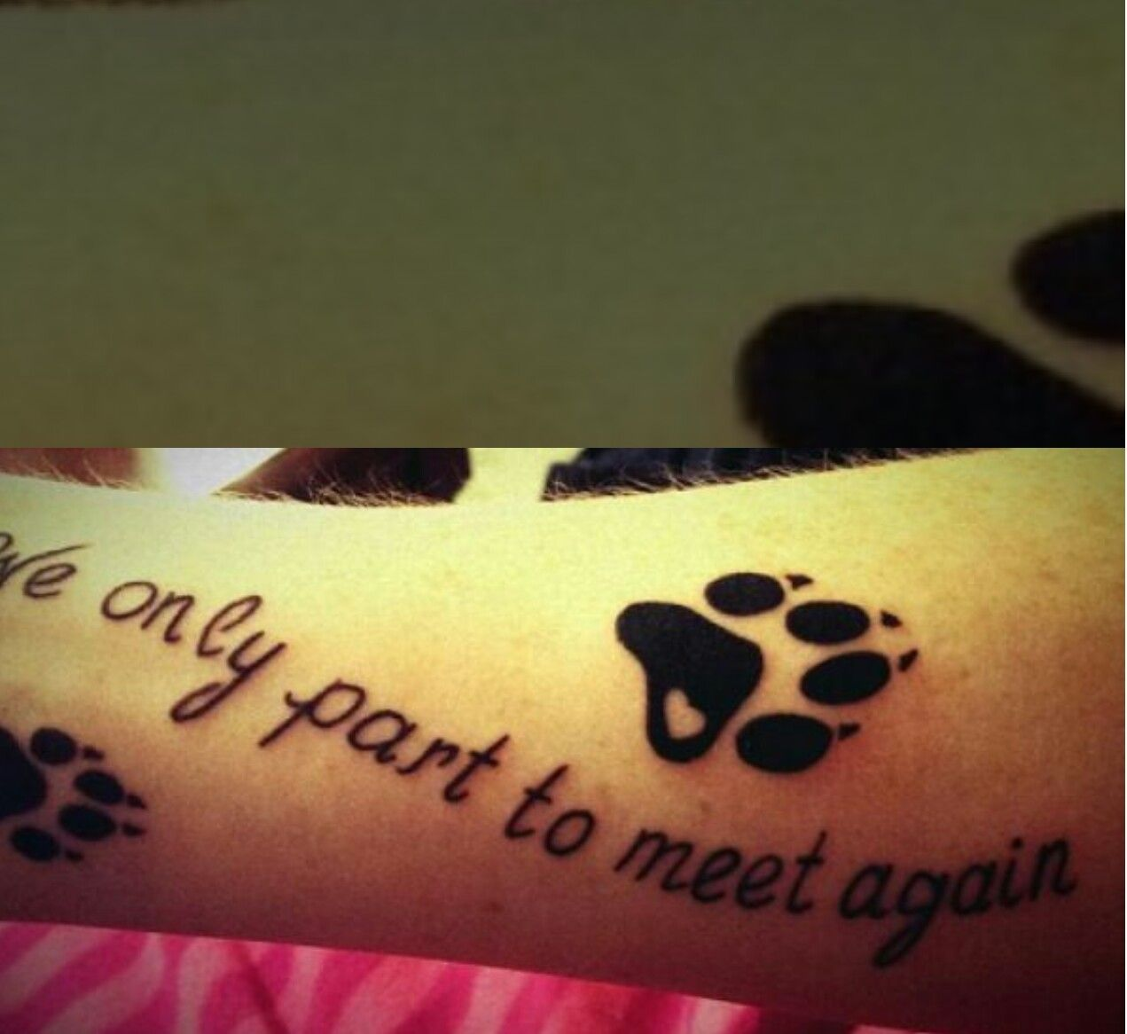 Pet Memorial Tattoo Tattoos Pet Memorial Tattoo Picture Tattoos