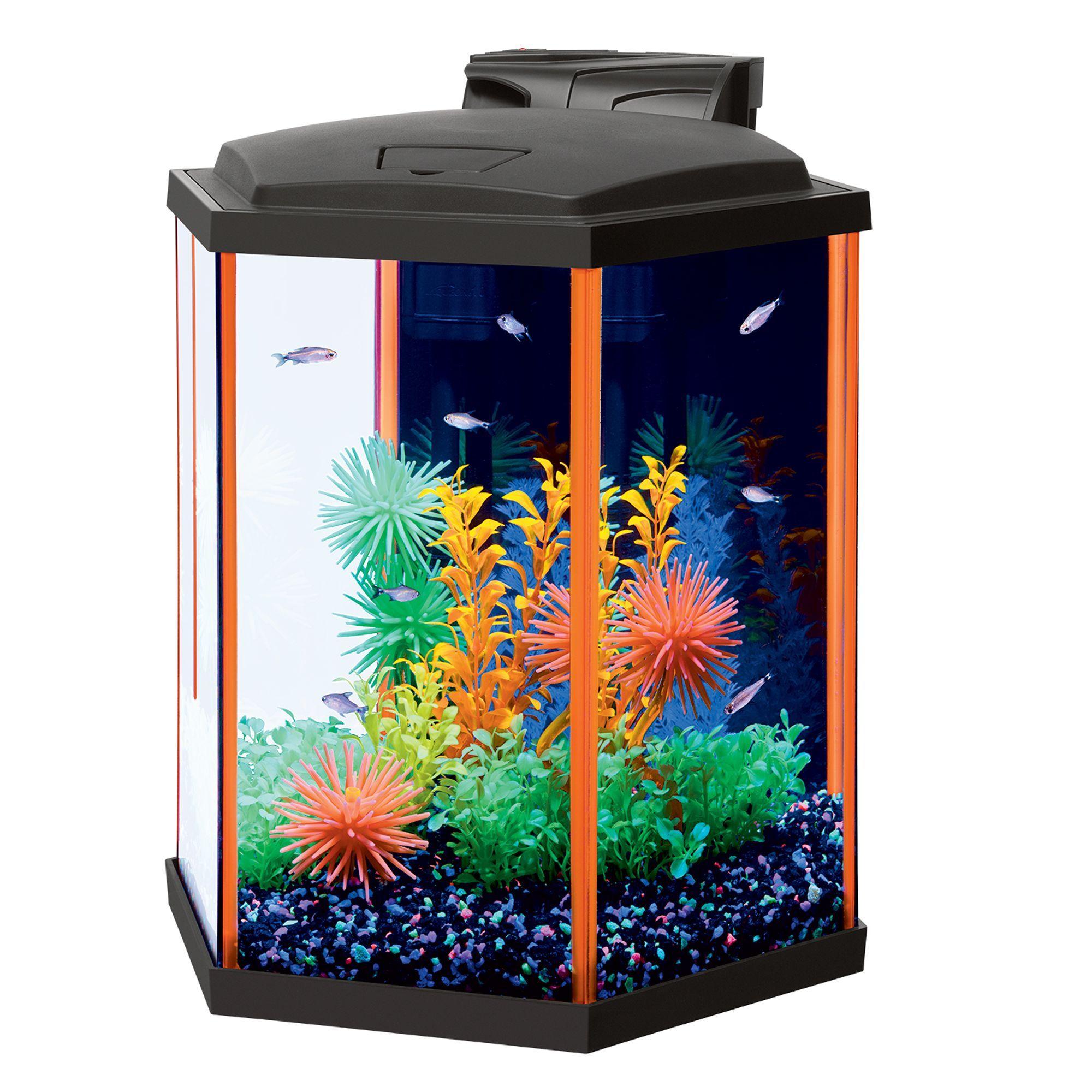 Aqueon Neo Glow Hexagon Starter Kit Size 8 Gal Black Blue Gravel Aquarium Kit Betta Fish Betta Fish Tank