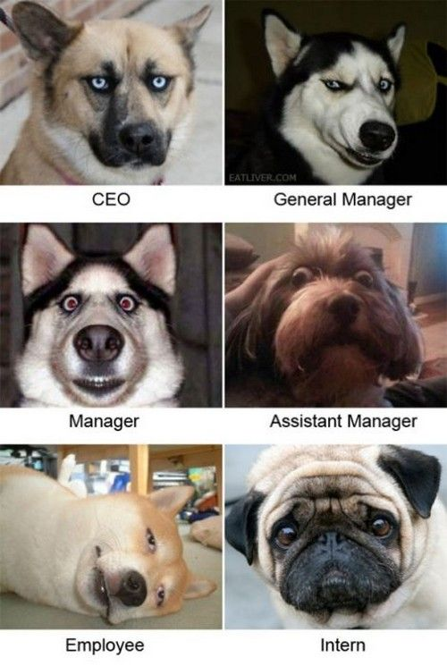 Corporate ladder dogs. Reminds me of Amazon, straight up.