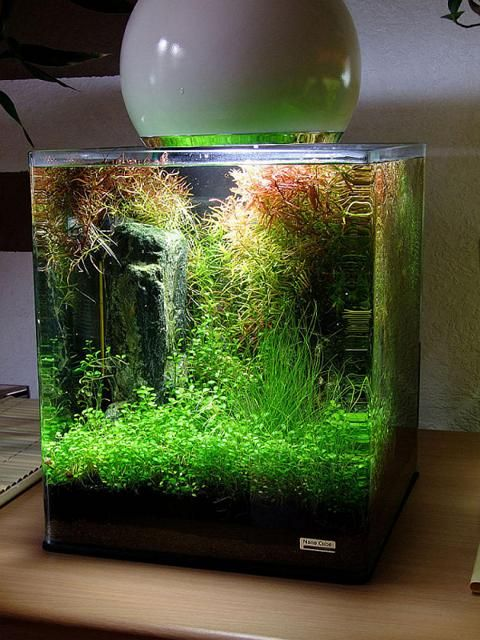 Nano cube aquarium pinterest cube aquariums and for Aquarium nano cube