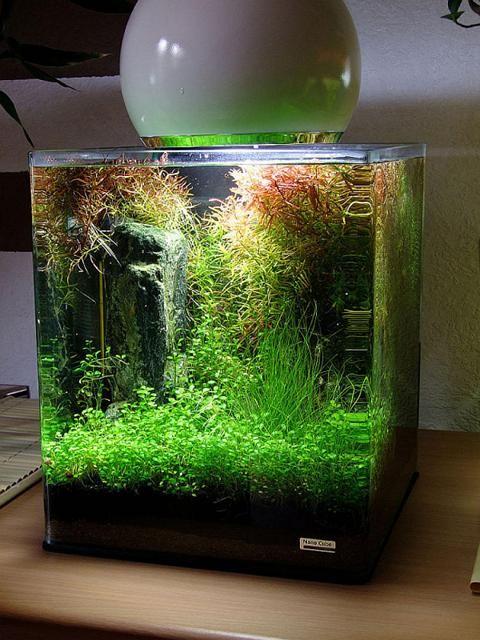 nano cube aquarium. Black Bedroom Furniture Sets. Home Design Ideas