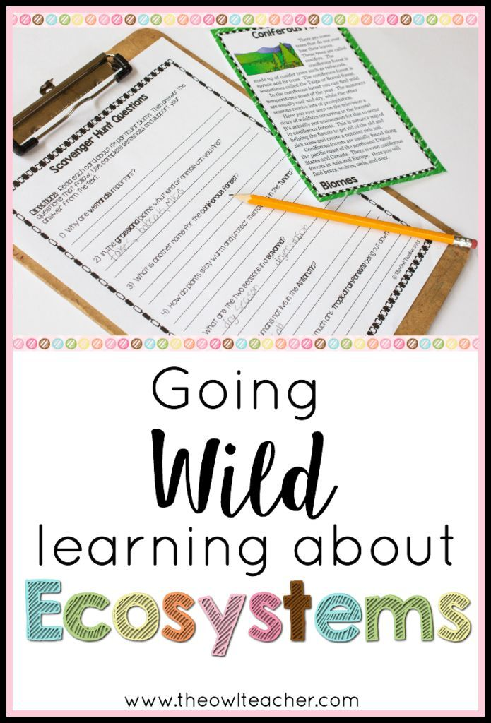 Going Wild for Ecosystems Pinterest Teaching reading, Fun