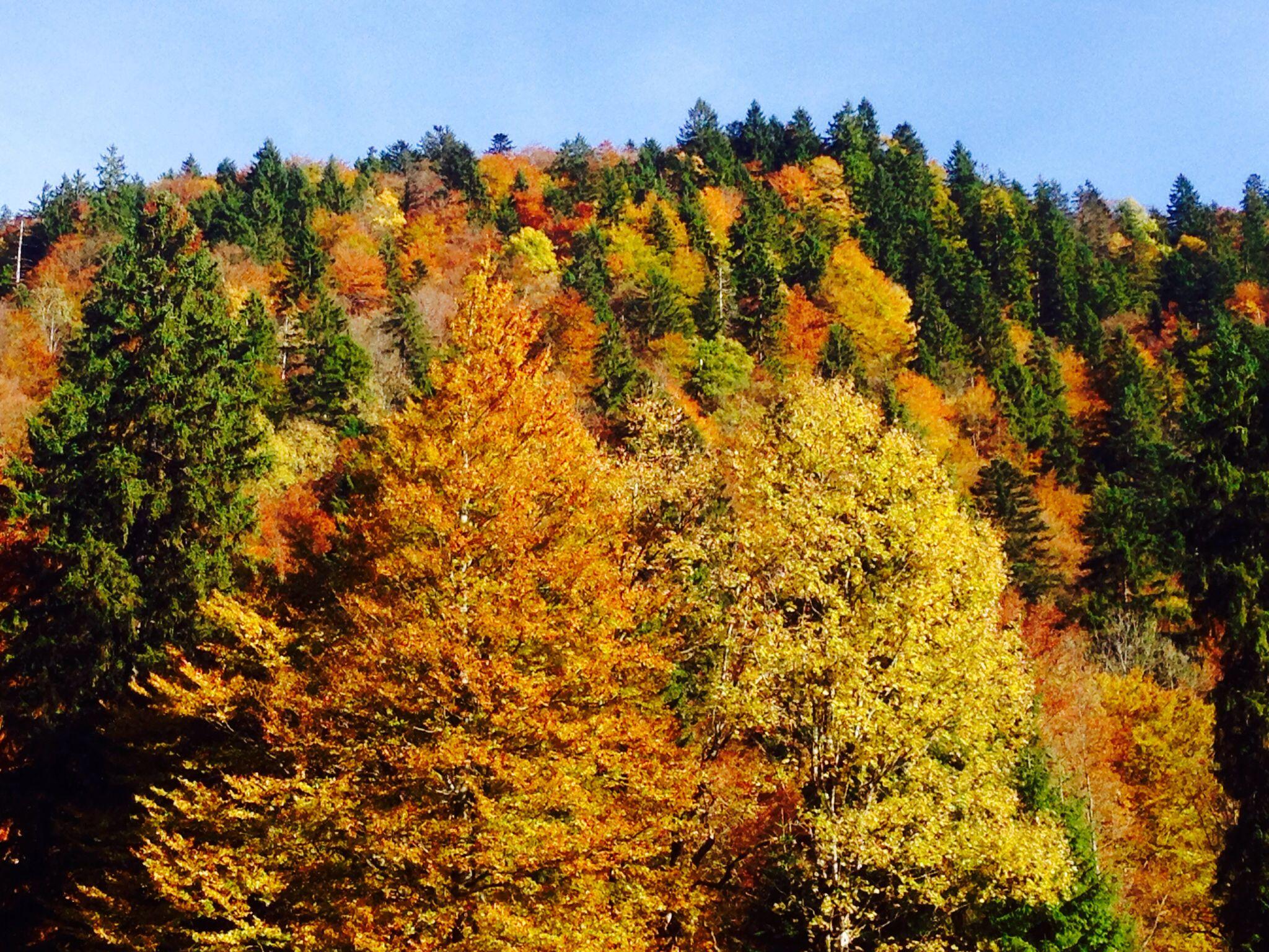 Die Farbpalette des Oktobers