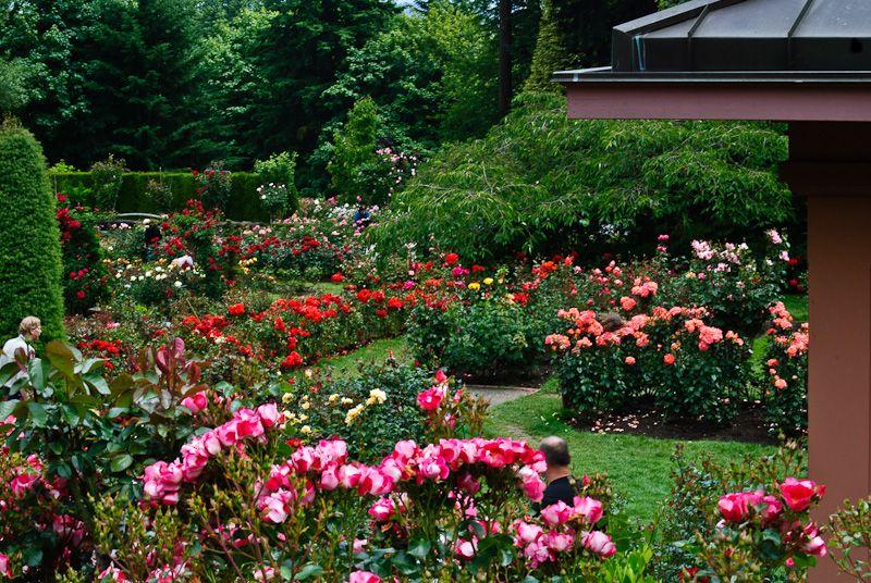Japanese rose garden portland or rose garden portland