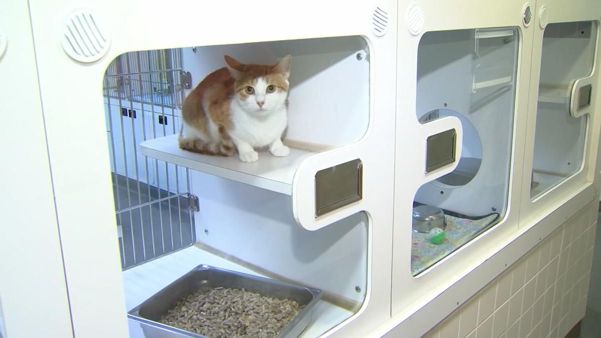 Conn Shelter Finds Forever Homes For All But One Cat Necn Humane Society Puppy Adoption Shelter
