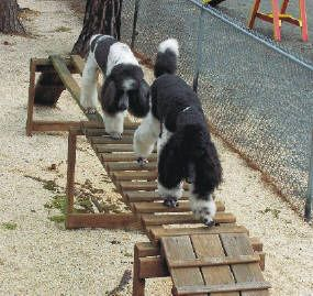 Could Make One Of These For Some Backyard Fun Dog