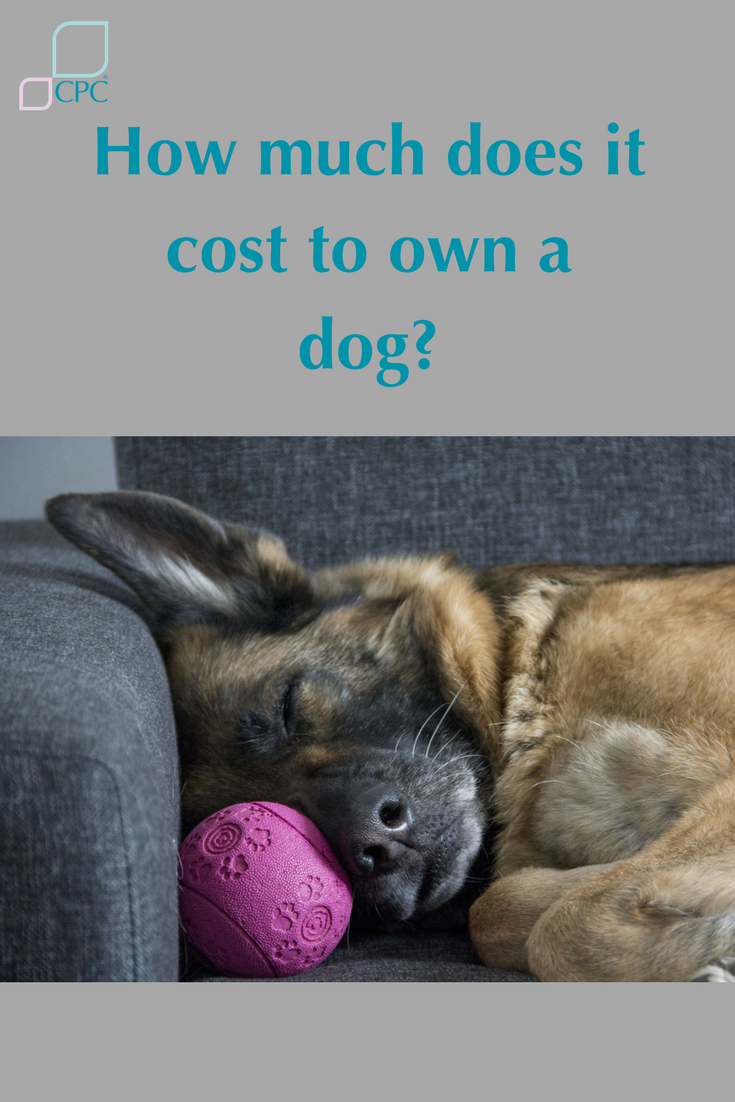 Dog Costs What it really means to own and maintain a pet