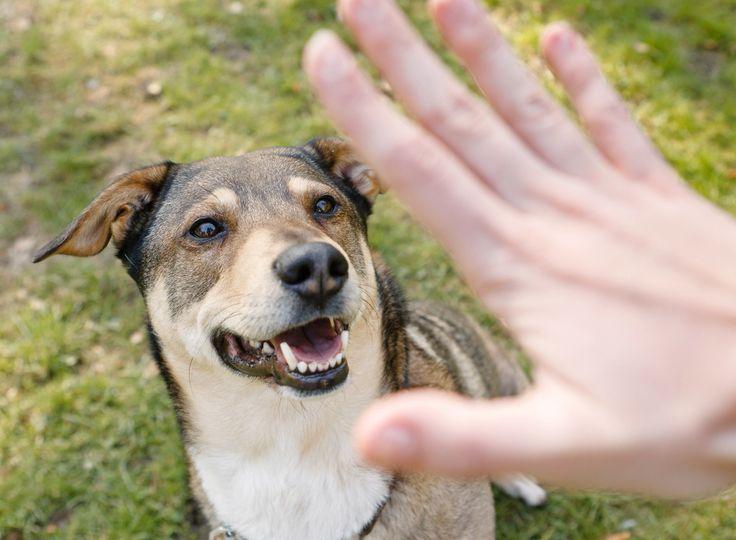 Hundeerziehung Nein sagen und Grenzen setzen Hunde