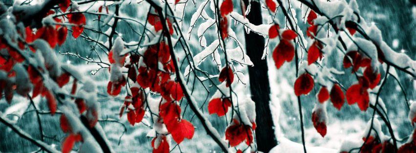 Snow leaves facebook cover | Best HD faebook covers | Twitter header