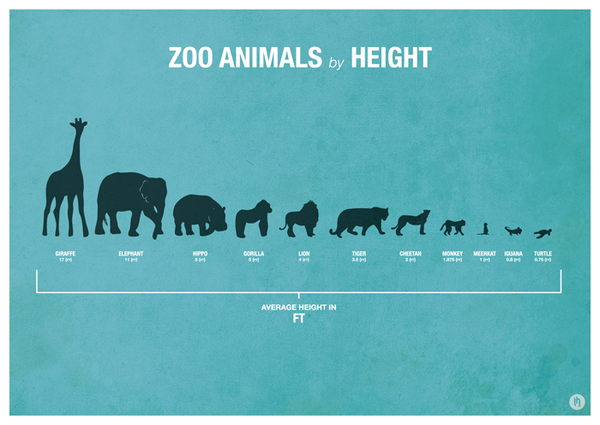 Zoo Animal Infographic Posters by Laura Hobson, via