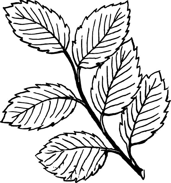 Imagem Gratis No Pixabay Filiais Videira Folhas Natureza Leaf Coloring Page Leaf Clipart Printable Leaves