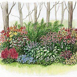 Shaded Garden Ideas Naturalized Shade Garden 110 Shade Garden Design Shade Garden Garden Layout