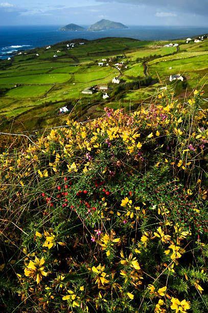 Wildflowers And Green Fields Along Darrynane Bay Ring Of Kerry Ireland Ireland Landscape Ireland Landscape Nature Landscape