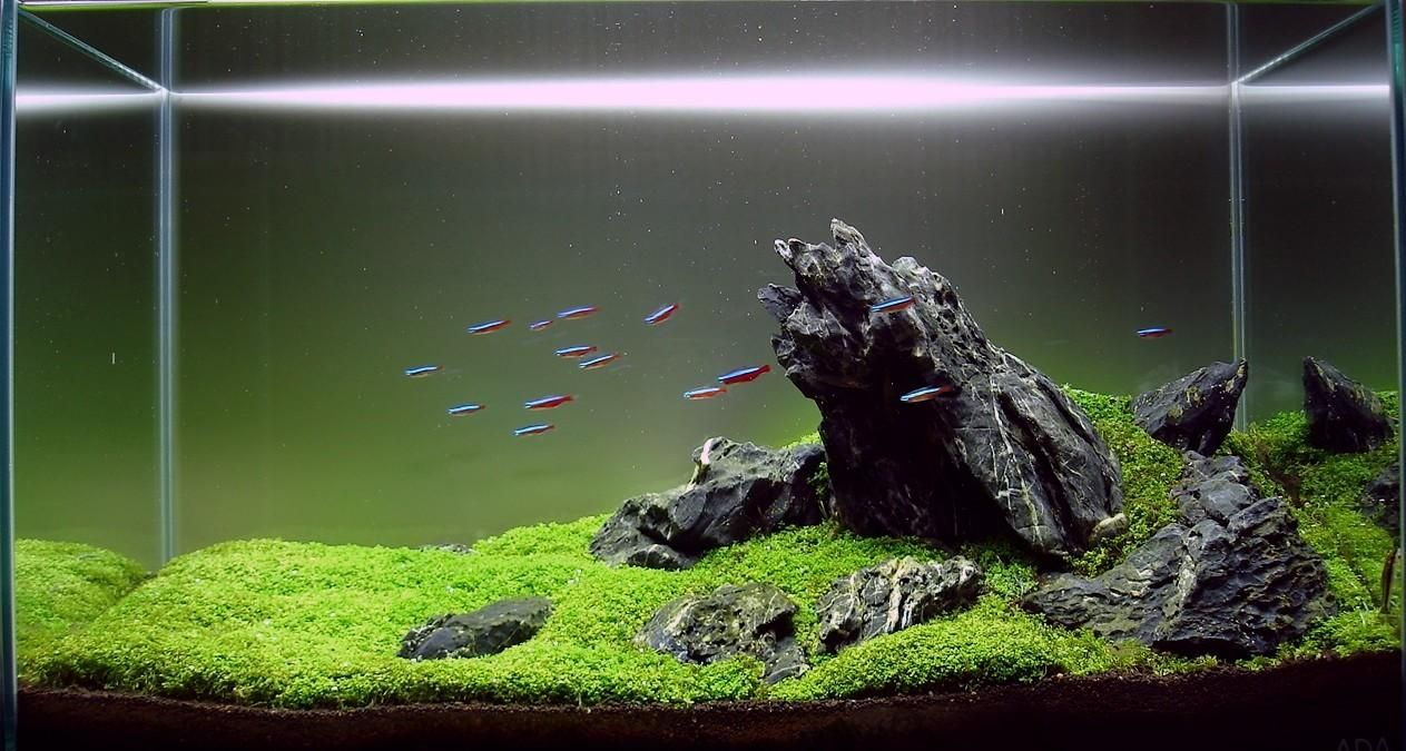 Aquascaping categoriesmy own take on it. AquaScaping
