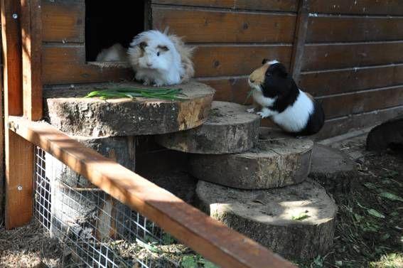 Meerschweinchen Stall Die Besten Schutzhauser Fur Draussen