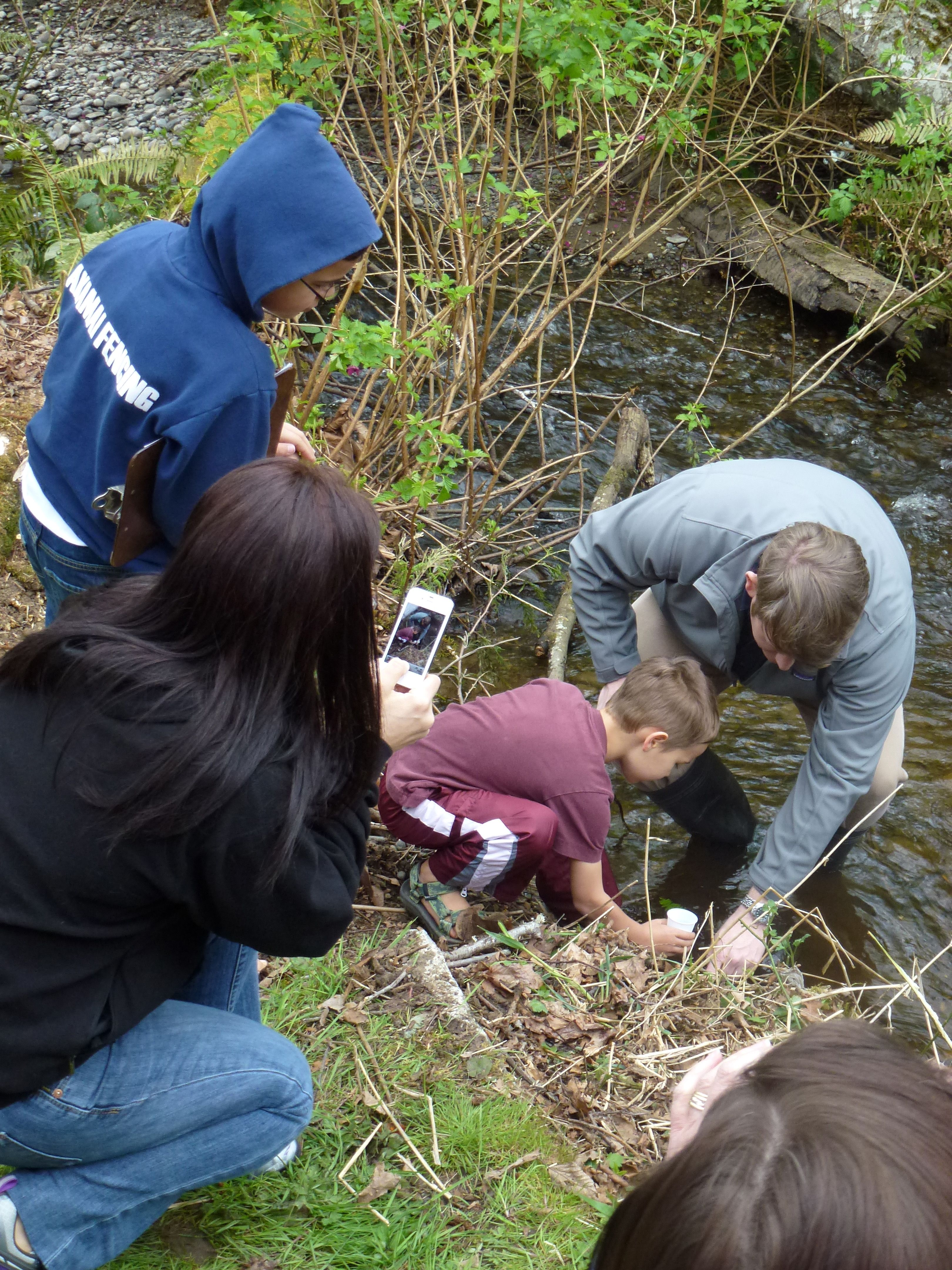 A Tiny Lake Sammamish Kokanee Salmon Fry Is Released As