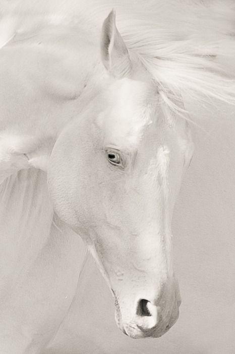 """""""White Magic Horse"""" #art"""