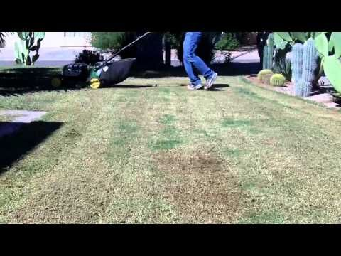 West Coast Turf Western Sod Farm Fresh California Sod Arizona Sod With Images Overseeding Arizona Turf