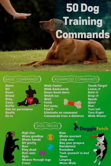 Dog Training Active Collar Hands Off Dog Training Review Allan