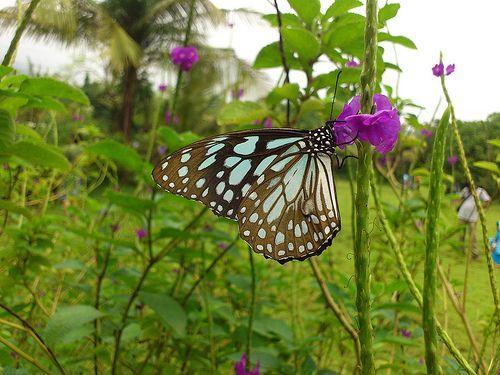 Image result for butterfly garden mumbai
