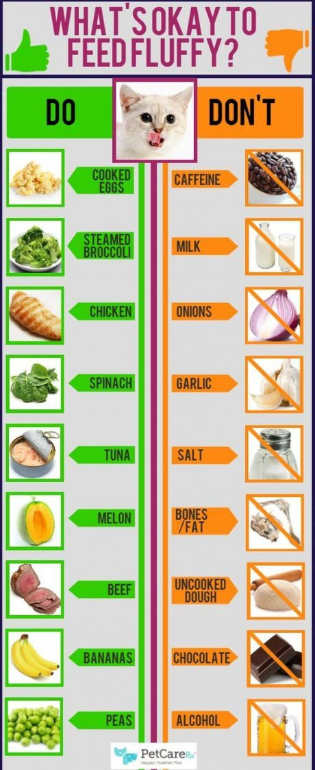 15 Brilliant Home Hack Diagrams You Should Pin Human Food For Cats Cat Infographic Cat Care
