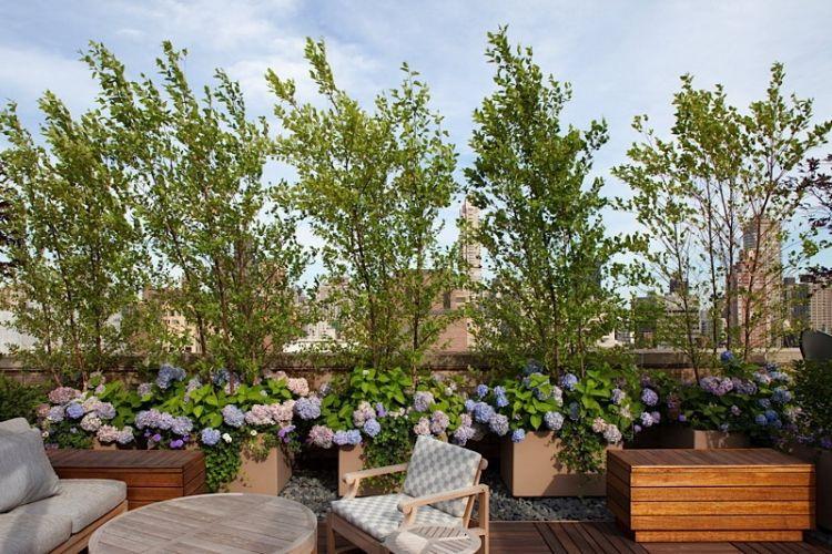 Balkon Sichtschutz Mit Pflanzen Hortensien Fur Deko Dachterrasse