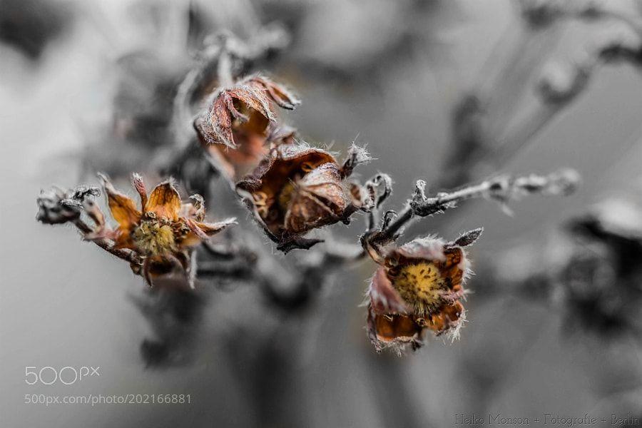 http://ift.tt/2jr6Zkd #Nature_breathtaking #Photos Ausgetrocknetes im Fokus (Hibiskus-Samen) by HeikoMonson