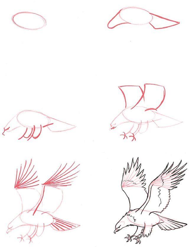 Aprende A Dibujar Animales Xd Aprender A Dibujar Animales Dibujos Dibujos De Animales