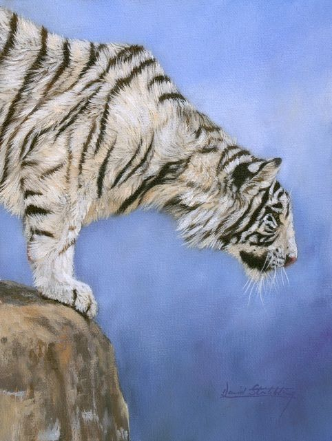 White tiger painting by David Stribbling
