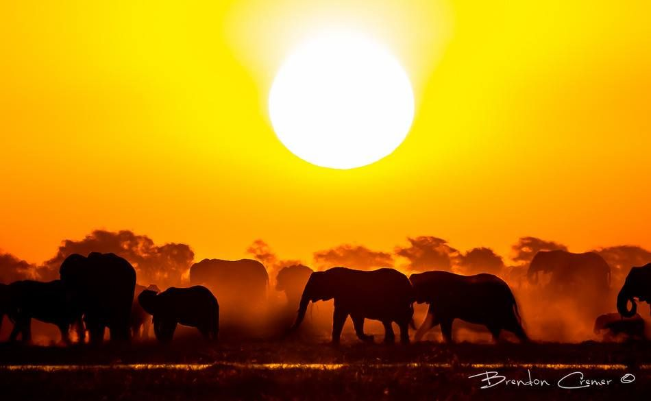 Elephant at Sunset by Brendon Cremer