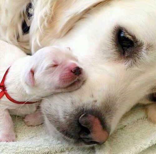 Theperfectworldwelcome Newborn Puppies Cute Animals Puppy Snuggles