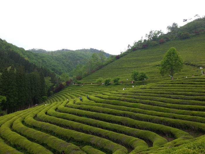 13 Amazing Places In Asia You Must Visit At Least Once  #travel #discover