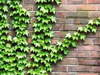 Está cada vez mais em alta, a utilização das plantas na decoração de um imóvel, principalmente pelo fato de que a planta não só funciona como uma ótima decoração como também dá mais vida ao ambiente além de ser uma ótima forma de ajudar na preservação do planeta. As trepadeiras são ótimas para tornar uma