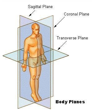 33+ What are the 3 anatomical planes trends