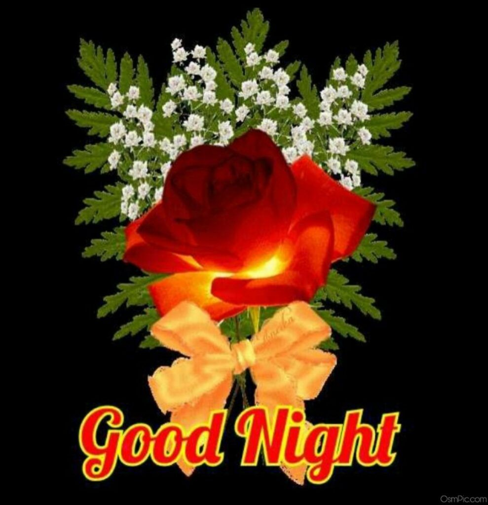 Good Night Wallpaper Download Hybrid Tea Rose Is Hd Wallpapers Backgrounds For Desktop Or Mobile Device T In 2020 Good Night Wallpaper Good Night Good Night Image