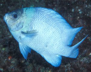Applaud Announcement of Massive New Ocean Reserve