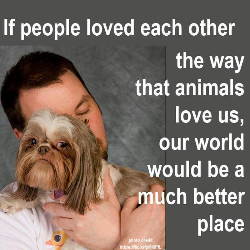 Image result for pictures of animals loved by us