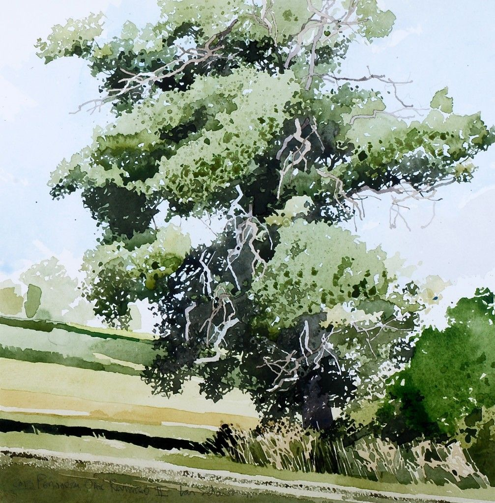 Ian Sidaway Watercolor Tree Art Akvarellkepek