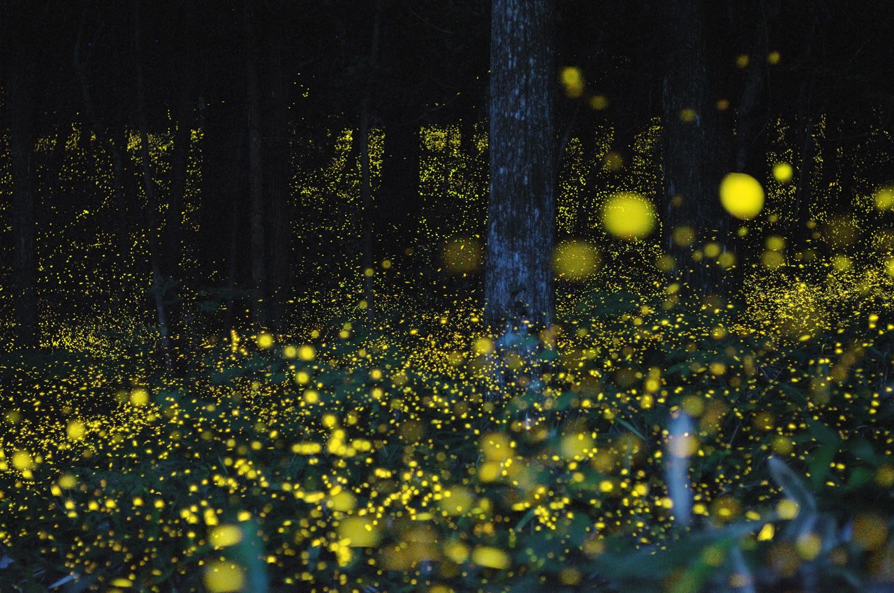 fireflies at night are just like christmas in the summer.