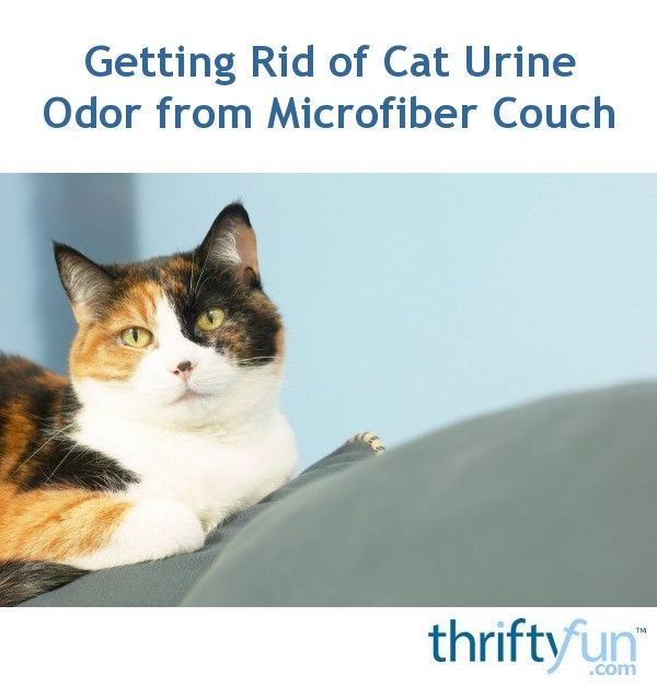 Awesome How To Remove Cat Urine Odor From A Microfiber Couch Alphanode Cool Chair Designs And Ideas Alphanodeonline
