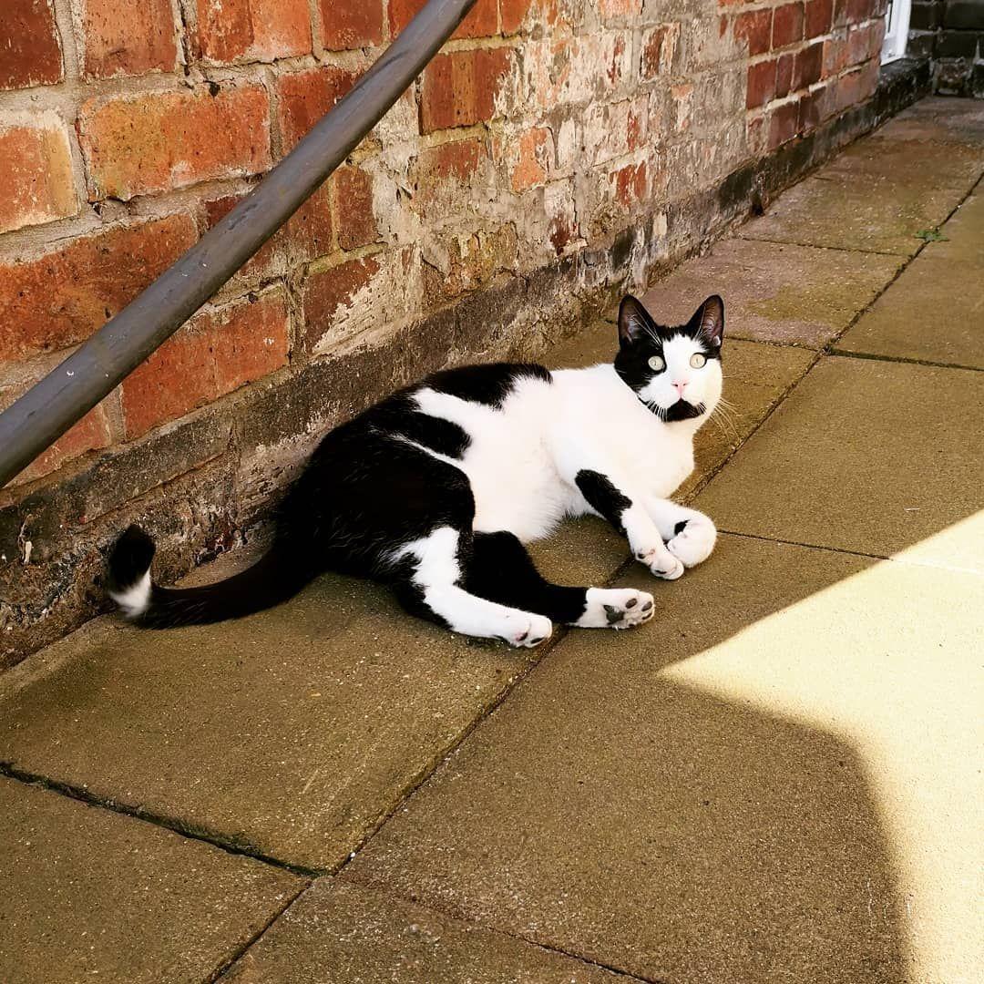 #photography #instapic #cats #catsofinstagram #cats_of_instagram #pets #petsofinstagram #funny #furry #fluffy #garden...