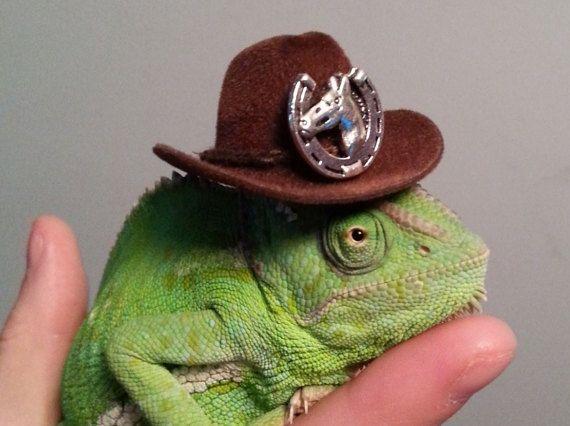 Chameleon Cowboy Hat by TheFancyChameleon on Etsy  a1edec364e3